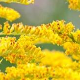 Цветы с желтыми соцветиями фото