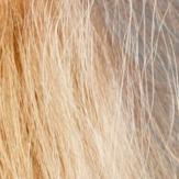 Výsledok vyhľadávania obrázkov pre dopyt elektrizujuce vlasy