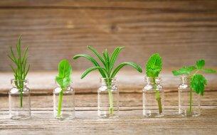 Už si skúsila pestovanie byliniek vo vode? Tieto sú na to ideálne!