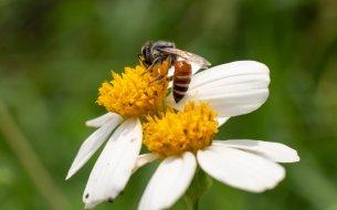 Hit Instagramu v gastre: Prečo jesť včelí peľ a na čo si dať pozor?