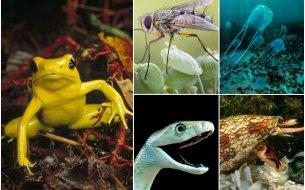 TOP 7: Najnebezpečnejšie zvieratá na svete: Zamrazí ťa po celom tele!