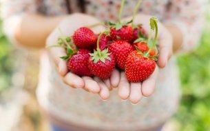 Čo s bohatou jahodovou úrodou? Máme skvelé tipy, ako spracovať jahody