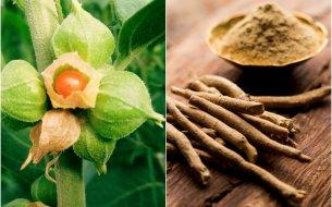 Ako si doplniť energiu a odstrániť vyčerpanie? Pomôže ajurvédska bylina!