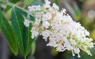 Prírodný liek na ženské problémy: Objav silu kvetov z juhoamerických Ánd!