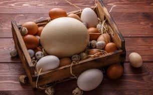 Ktoré vajíčka sú zdravšie než slepačie? Dokážu predísť vzniku rakoviny?