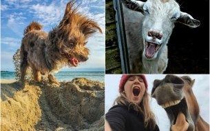 Najvtipnejšie fotky zvierat: Momentky, ktoré stoja za to!