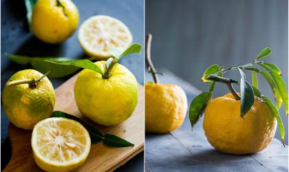 Exotické citrusové osvieženie? Vyskúšajte yuzu!