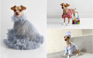 Zoznam sa s Boobie Billie – talianskym psíkom so závideniahodným štýlom