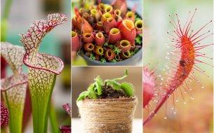 TOP mäsožravé rastliny: Ktoré z nich by si privítala u seba doma?