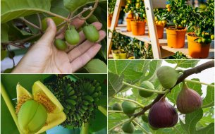 Ktoré exotické rastliny možno pestovať v záhrade aj u nás na Slovensku?