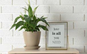 Nezničiteľná izbová rastlina: Táto prežije, aj keď ju zabudneš poliať!