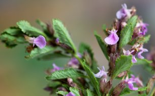 TOP bylina na tráviace problémy: Poradí si s hnačkou, parazitmi či kolikami