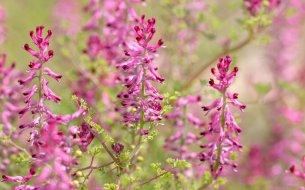 Skvelá bylinka na hemoroidy i kožné problémy: Ktorá to je?